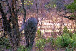 Kruger NP 02