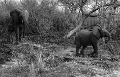 Kruger NP 03
