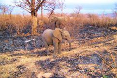 Kruger NP 04 - kopie