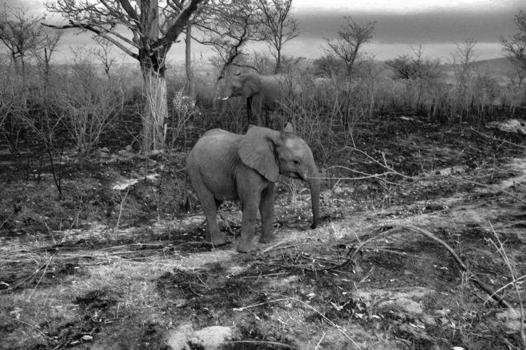 Kruger NP 04