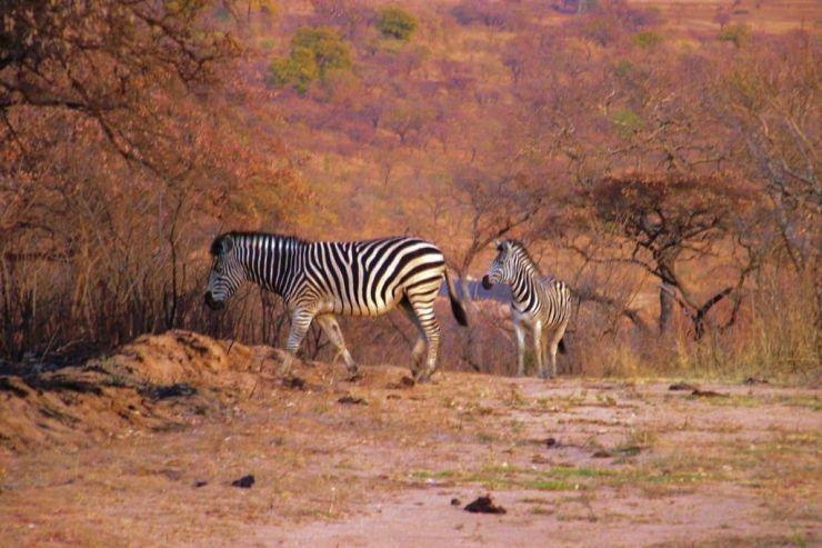Kruger NP 05