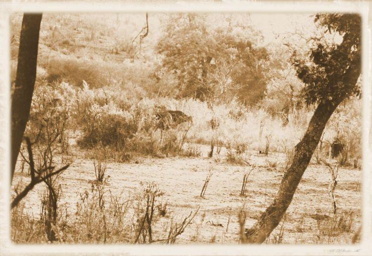 Kruger NP 08