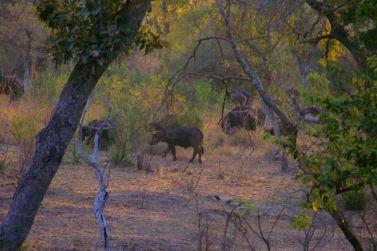 Kruger NP 09