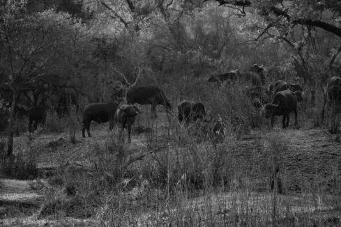 Kruger NP 11