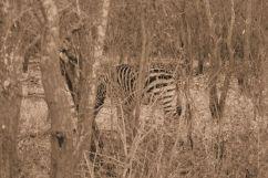 Kruger NP 12