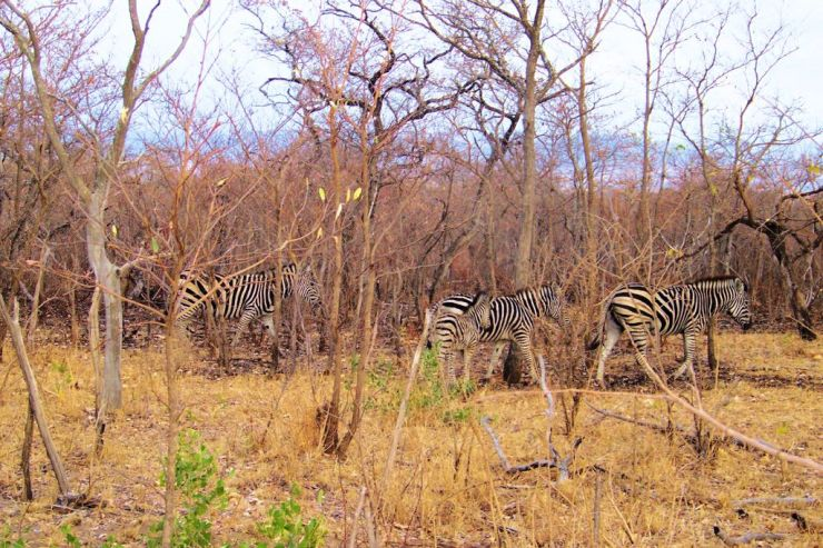 Kruger NP 13