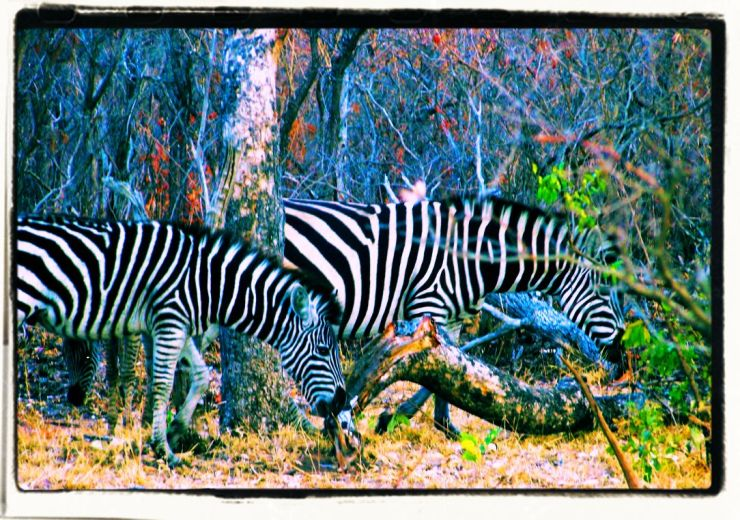 Kruger NP 14 - kopie