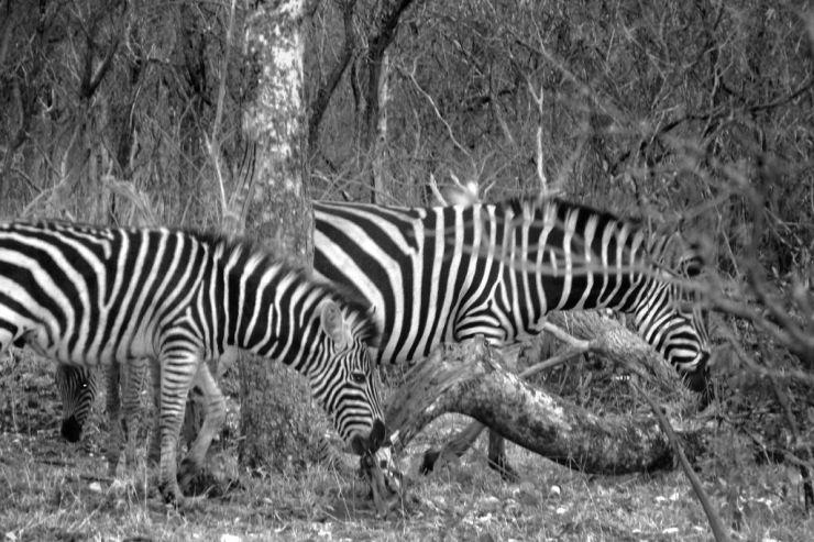 Kruger NP 14