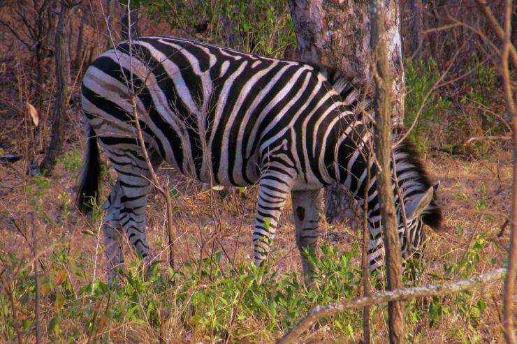 Kruger NP 15