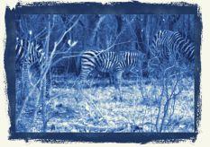 Kruger NP 16