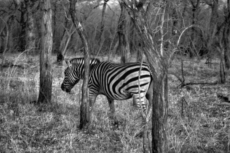 Kruger NP 17