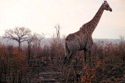Kruger NP 18