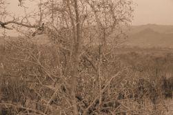 Kruger NP 19