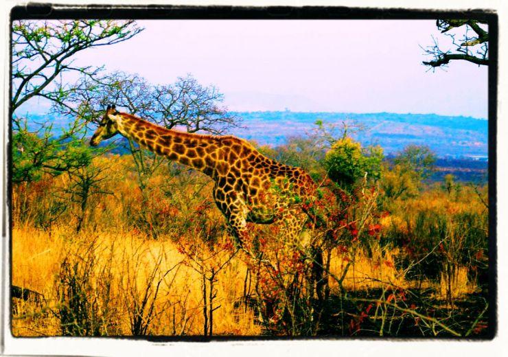 Kruger NP 20