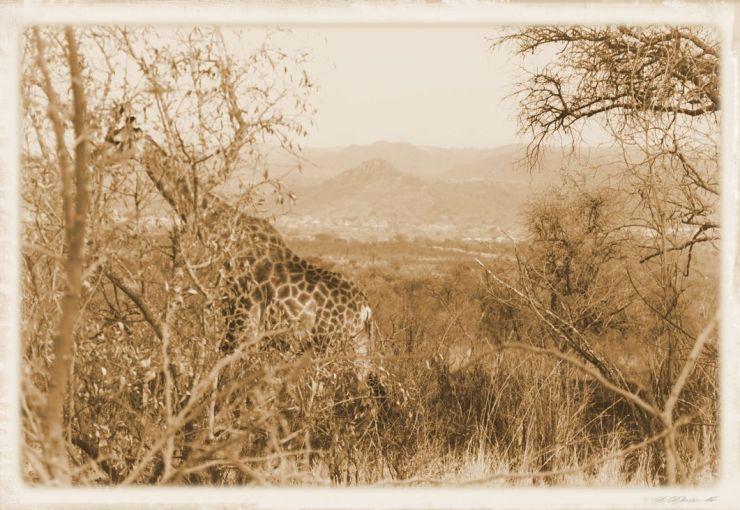 Kruger NP 21