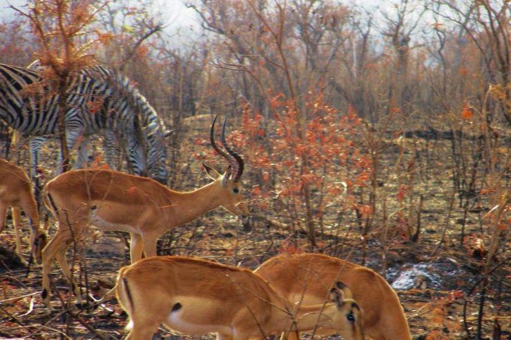 Kruger NP 23 - kopie