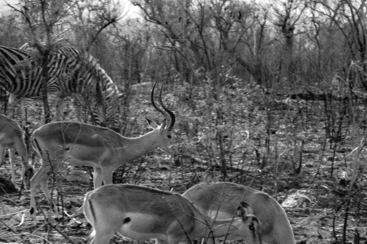 Kruger NP 23