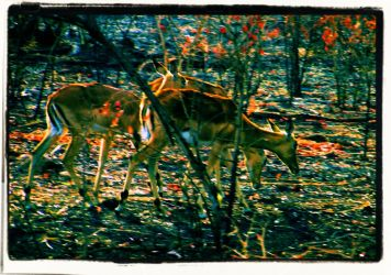 Kruger NP 24