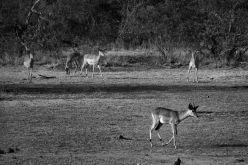 Kruger NP 25