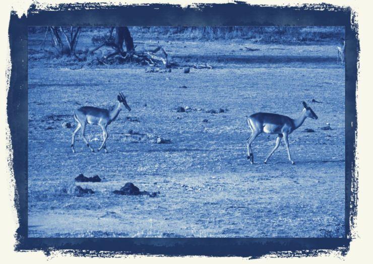 Kruger NP 26