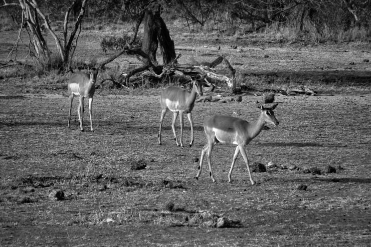 Kruger NP 27