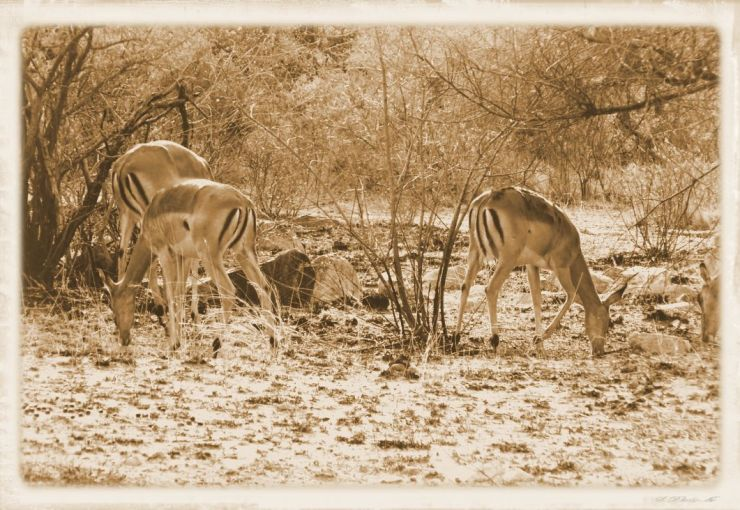 Kruger NP 28