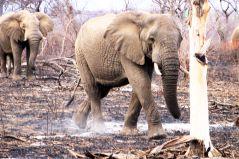 Kruger NP 29 - kopie