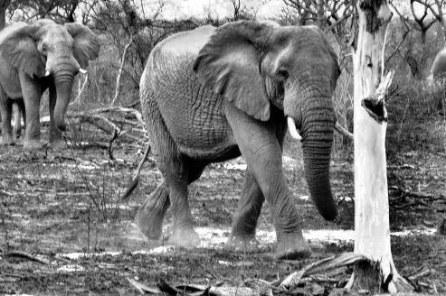 Kruger NP 29