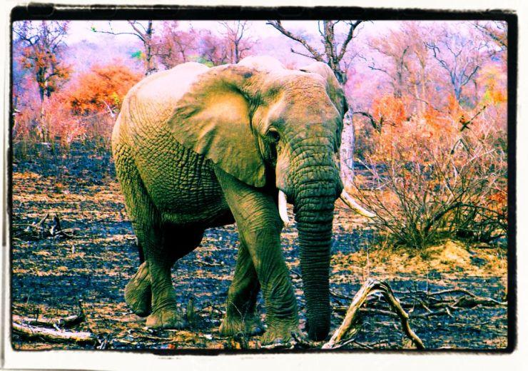 Kruger NP 30 - kopie