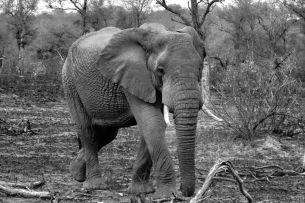 Kruger NP 30