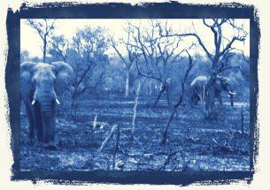 Kruger NP 31