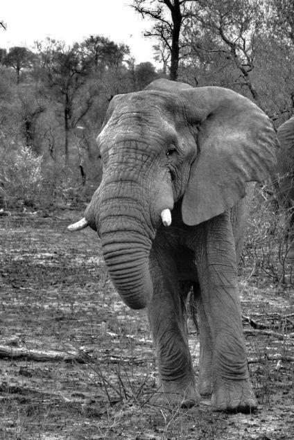 Kruger NP 32