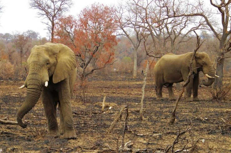 Kruger NP 33 - kopie