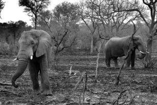 Kruger NP 33