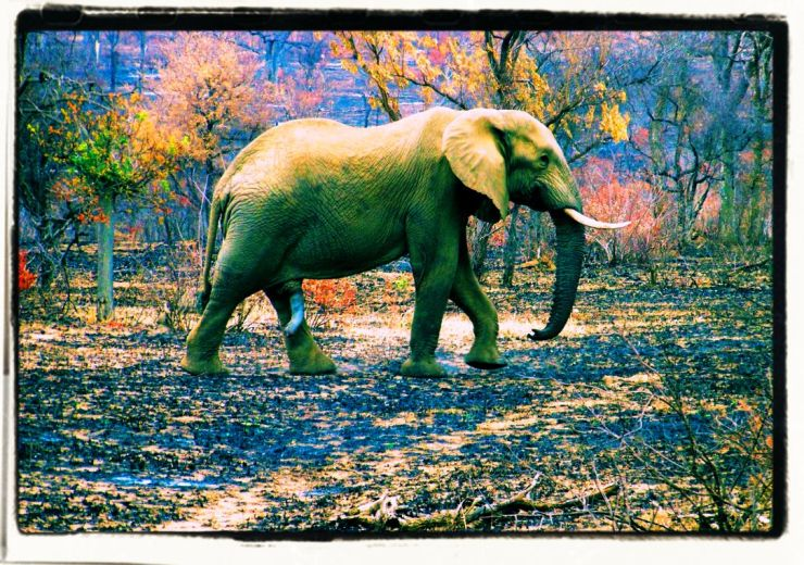 Kruger NP 34