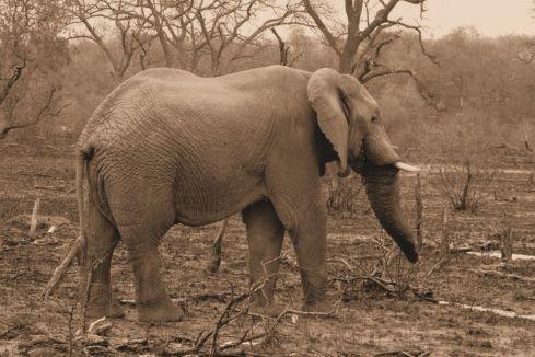 Kruger NP 35