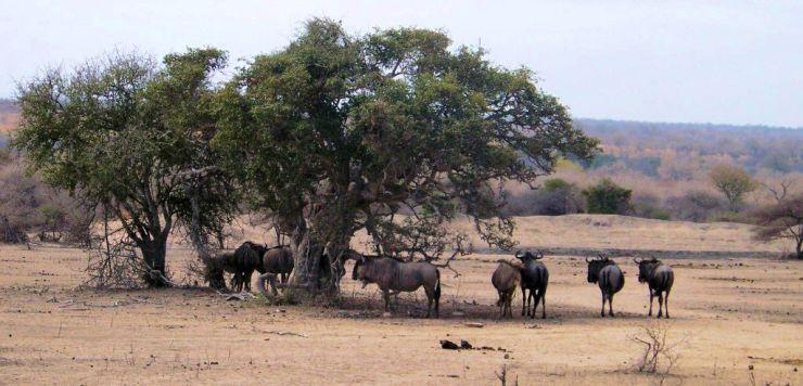 Kruger NP 40