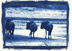 Kruger NP 41