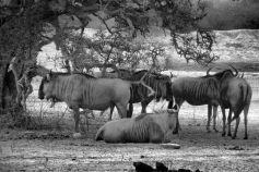Kruger NP 42