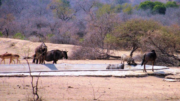Kruger NP 45