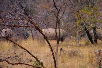 Kruger NP 46