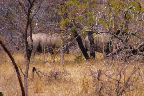 Kruger NP 47