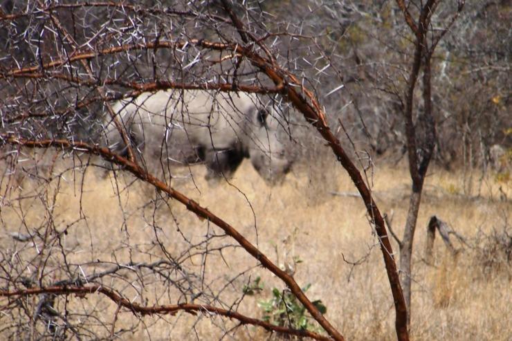 Kruger NP 49