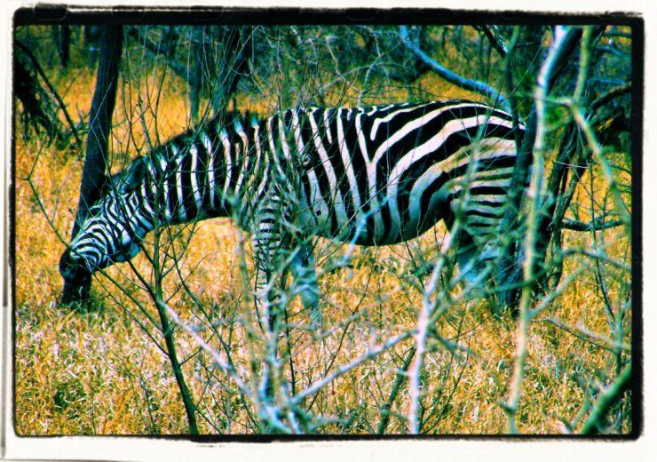 Kruger NP 51 - kopie