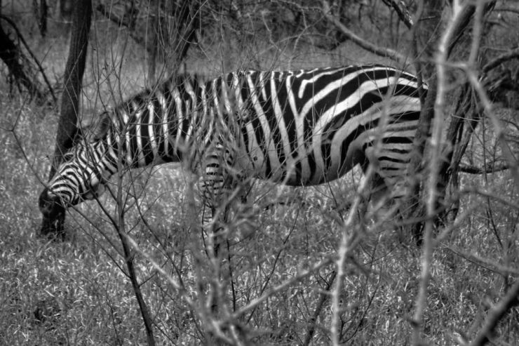 Kruger NP 51