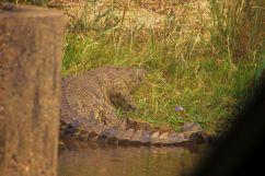 Kruger NP 52