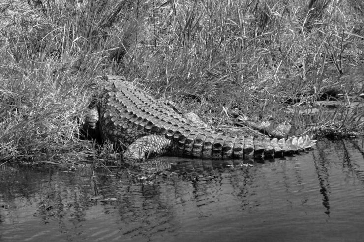 Kruger NP 53