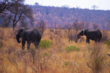 Kruger NP 55