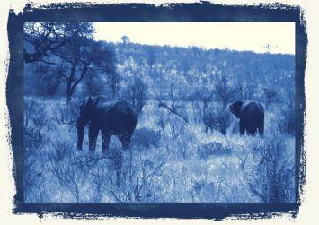 Kruger NP 56