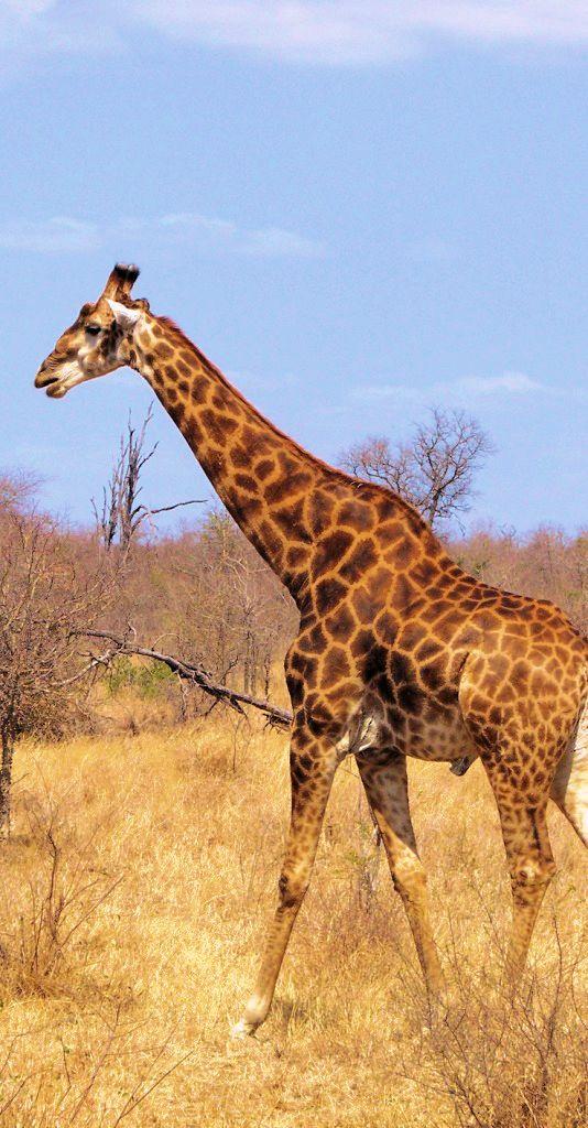 Kruger NP 57
